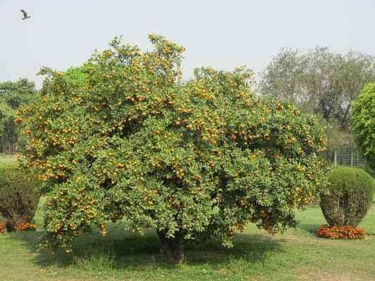 Všude stromy obsypané mandarinkami. U vchodu se chlubí, že zalévají recyklovanou vodou. Bylo to cítit už před vchodem.