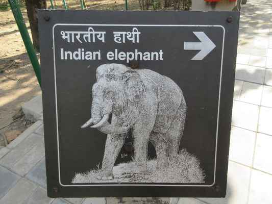 Slon je souhrnný český název pro dva rody chobotnatců - Loxodonta a Elephas. Slon je největší žijící suchozemský savec. Při narození váží okolo 100 kg. Samice slona je březí 20 až 22 měsíců, což je nejdelší doba březosti u suchozemského zvířete. Slon se dožívá 60 až 70 let. Největšího slona zastřelili v Angole v roce 1974, vážil 12 000 kilogramů. Rody s českým názvem slon obsahují tři žijící druhy, které patří do dvou rodů - Loxodonta (slon africký a pralesní) a Elephas (slon indický). Velmi blízkým příbuzným byl i vyhynulý mamut (Mammuthus).