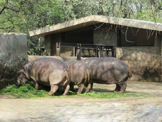 Hroch obojživelný (Hippopotamus amphibius) je velký sudokopytník z čeledi hrochovitých, adaptovaný k životu ve vodním prostředí. Vyskytuje se v Africe na jih od Sahary. Jeho nejbližším příbuzným je hrošík liberijský. Dříve byli hroši pokládání za příbuzné prasat, podle nedávných výzkumů však mají mnohem bližší příbuzenské vztahy k předkům kytovců.