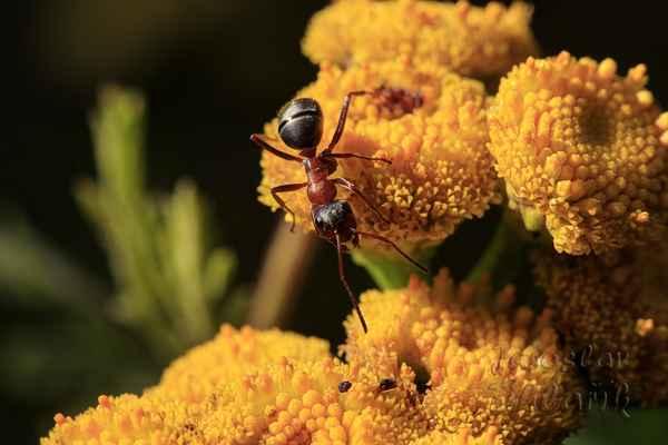 Ferda Mravenec - práce všeho druhu?
