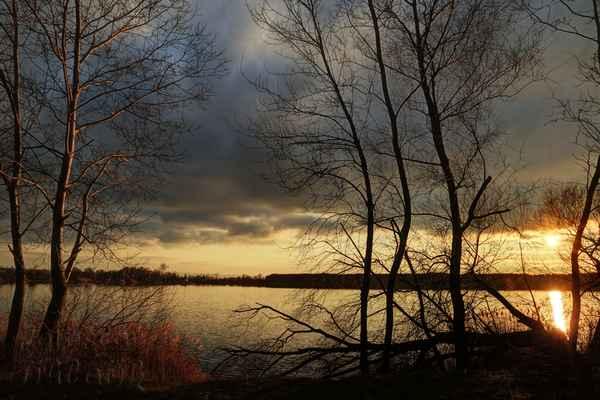 Zde mě zaujaly nasvícené stromy na podkladu z tmavé oblohy. Bobři stále pracují, stromy padají jeden za druhým.