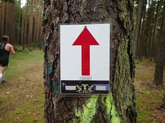Směrová šipka v lese Bor.