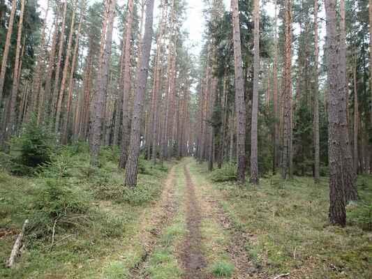 Smrkovo-borový les před obcí Žebnice s bohatým podrostem.