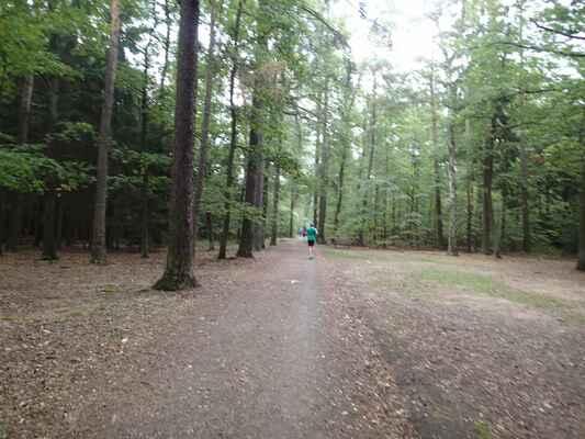 Dlouhá lesní rovinka po šotolině
