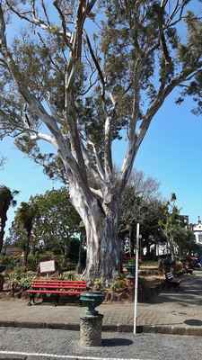 Hodně často viděné stromy