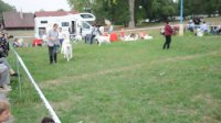Psi mezitřída - Male Intermediate class