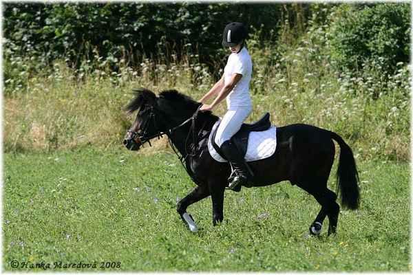 Koně v Podkrkonoší - aneb prezentace nejen plemen koní - Pony hřebec Pavel J Lombard - v sedle Kristýnka Serbousková z Pony centra - JK