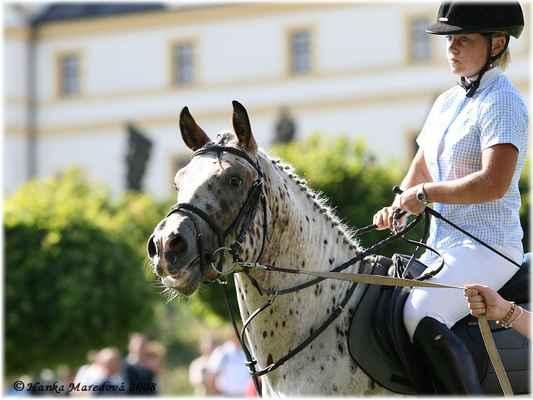 Koně v Podkrkonoší - aneb prezentace nejen plemen koní - Pony hřebec Safír se svou majitelkou Martinou Hejnyšovou