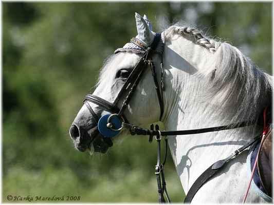 Koně v Podkrkonoší - aneb prezentace nejen plemen koní - Pony hřebec Bento