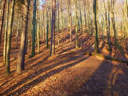 čeká mě výživný výstup mezi nádhernými stromy...