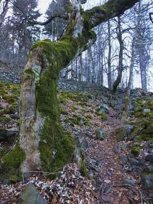 vrcholová část ralska je tvořena čedičovou horninou tefritem...