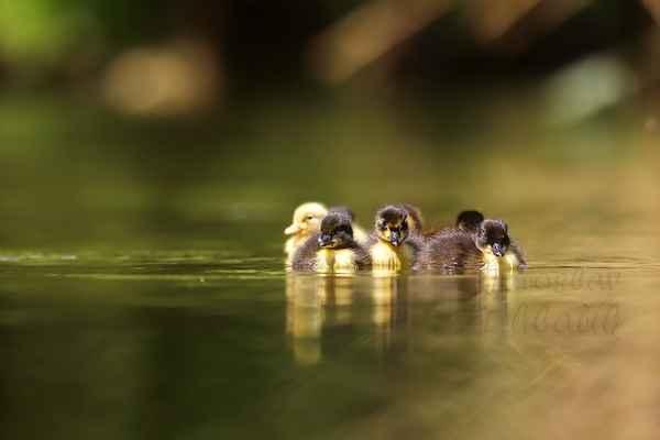 Když jsou maličká, drží se hezky pohromadě, …