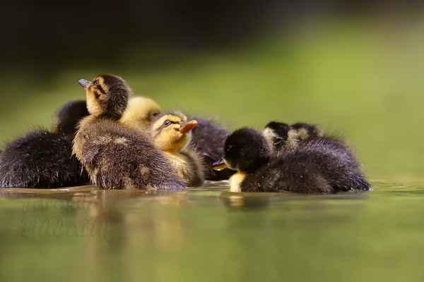 Malé kačenky jsou velmi zvědavé, …