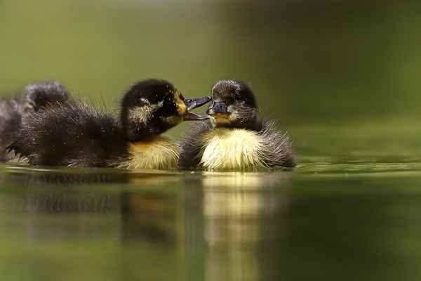 Bratříček nebo sestřička? Nemají ruce, znají jen kontakt vizuální a zobáčkem.
