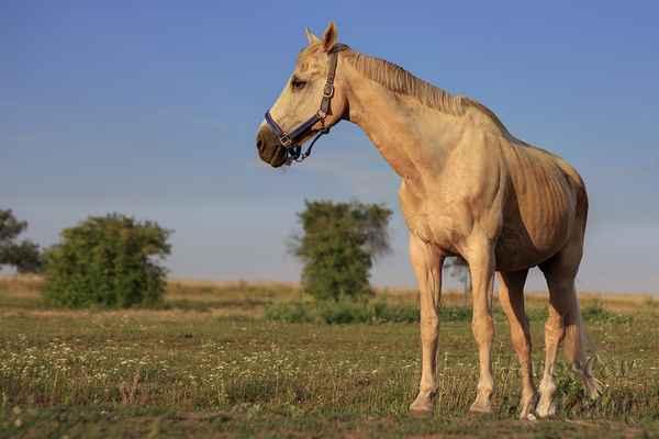 Na přání milovníků koní je zařazuji do těchto alb. Přání se přece mají plnit.