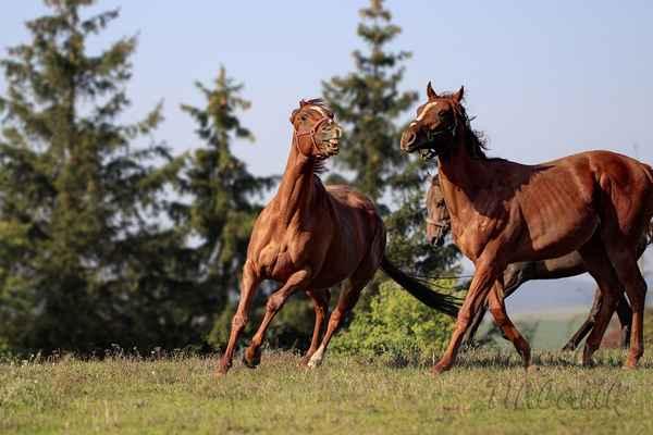 Postavíte-li se k ohradě s koňmi, spatříte mnoho skvělých momentů.